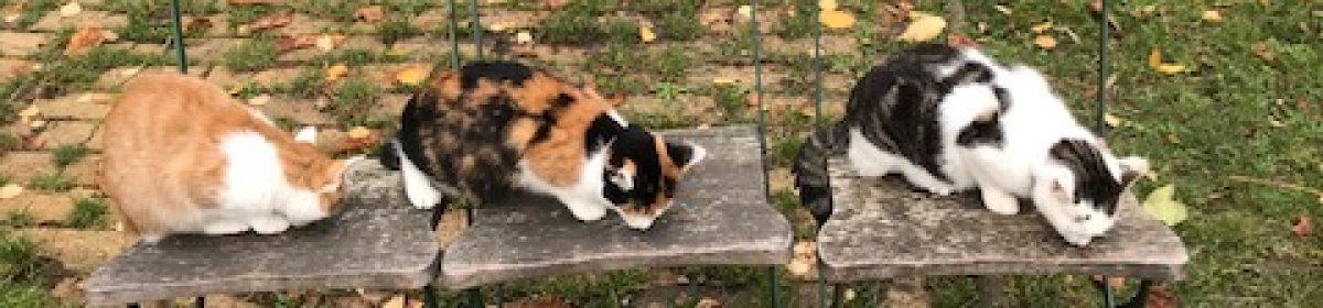 Das Katzenhaus