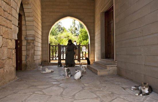 Katzenkloster 1