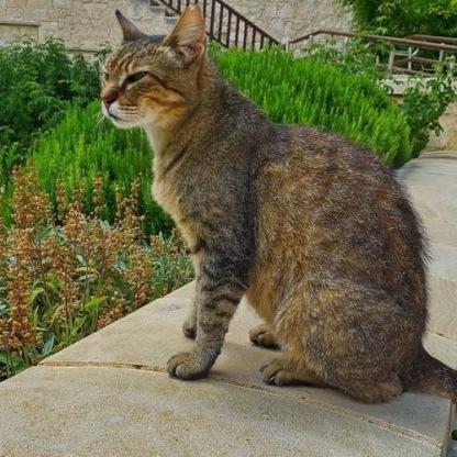 Katzenkloster 10