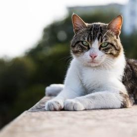 Katzenkloster 11