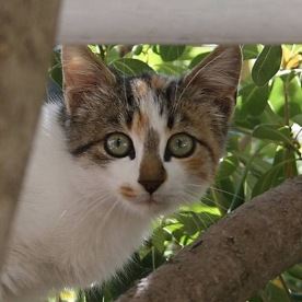 Katzenkloster 12