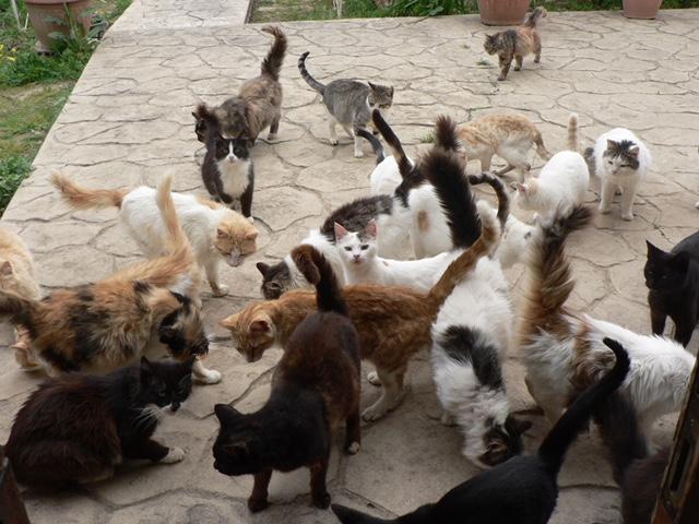 Katzenkloster 7