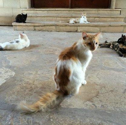 Katzenkloster 9