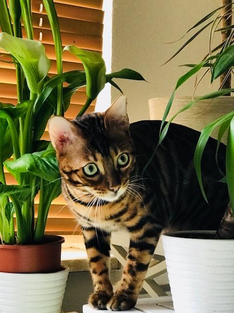 Katzenwetter 1
