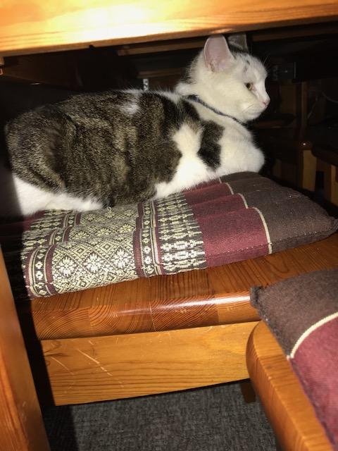 Katzenwetter11