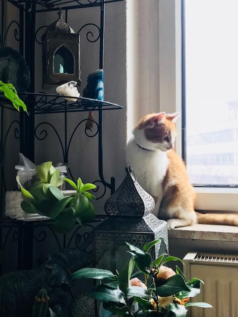 Katzenwetter8