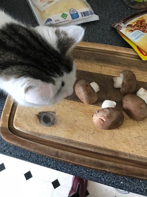Katzenwetter9
