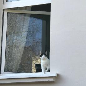 Ginger schaut interessiert aus dem Fenster