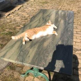 Lara sonnt sich auf Ihrer Sonnenbank