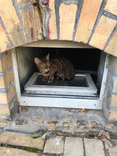 Der Keller scheint wohl der sicherste Ort