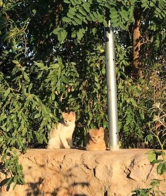 Katzenglück im Libanon