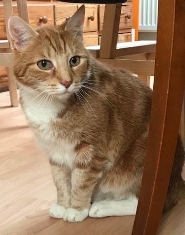 1 Tigger Katzenhaus Blog Tigger und die Schnecken
