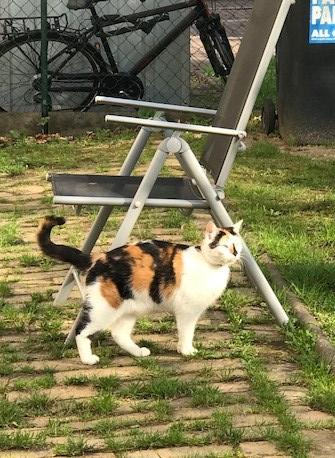 Frühlingskatzen8