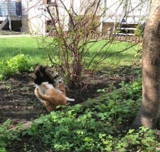 Frühlingskatzen14