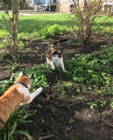 Frühlingskatzen6