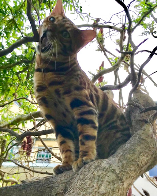 Tree Climbing School for Cats