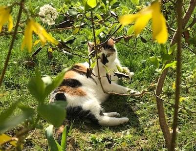 Cat Watching – Katzenspaß imHof