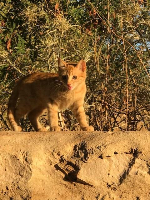 Libanon Katzen 7