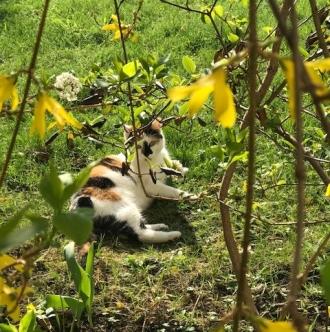Frühlingskatzen9
