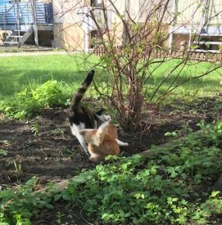 Frühlingskatzen15
